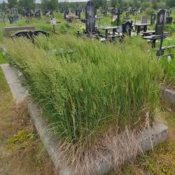 Уборка могилы. Северное кладбище. До